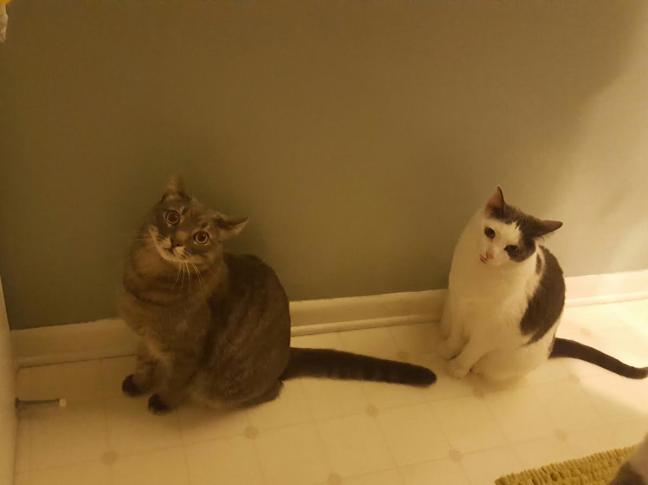 ShowerCats