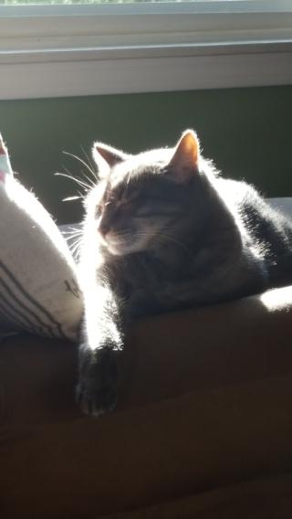 Gandy sunshine